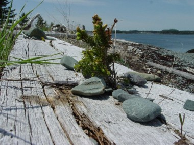 HOPE FOR THE FUTURE AND ENVIRONMENTAL ACTION - BARNES ISLAND, BAY OF FUNDY