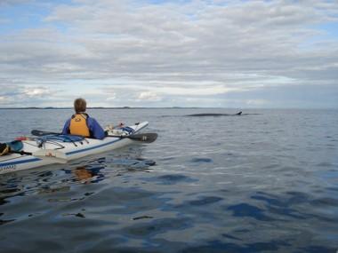 KATINKA POSTMA WATCHED A FIN WHALE NEAR DEER ISLAND. PHOTO BY FRANK POSTMA.